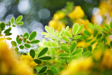 Lovely plant leaves, closeup