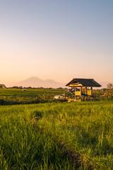 Fotobehang Rijstvelden Magic sunset on the sunlit rice field