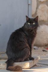 Portrait of a black furry homeless cat