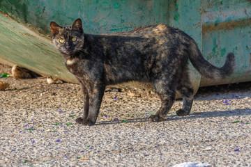 Portrait of a homeless female cat