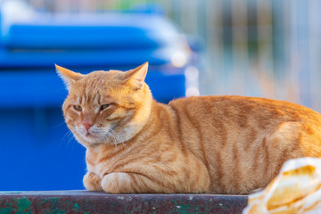 Red cat is lying on the garbage can front of blue can at background
