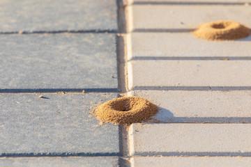 Round anthill on cobblestone