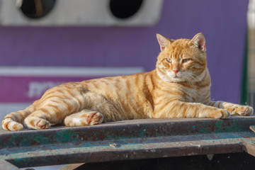 Beautiful red cat is lying on the garbage can
