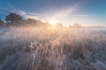 Beautiful autumn sunrise landscape with hoarfrost on the grass.