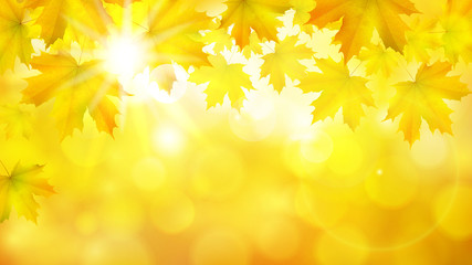 Natural yellow orange horizontal rectangular background with maple leaves, tree branches and sun rays, vector autumn background