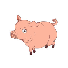 Big pink pig with curled tail, walking