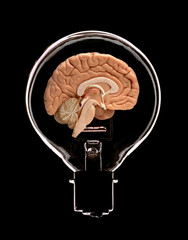 GLASS ELECTRIC LIGHT BULB CONTAINING HALF OF HUMAN BRAIN