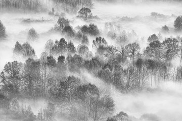 Las z mgłą rano - 237352586