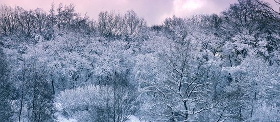 Winter landscape with snow covered trees and pink sky.