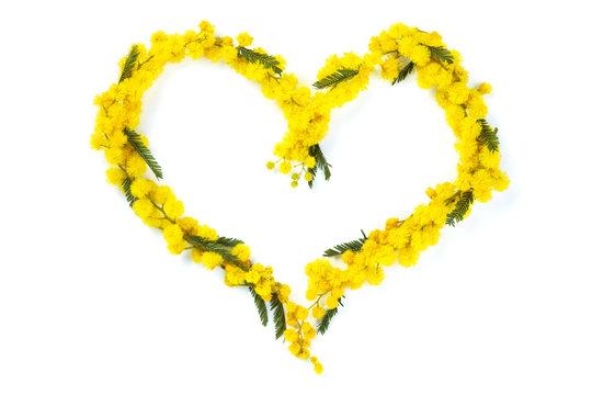 Heart  of mimosa.