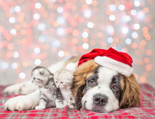 Big saint Bernard puppy in Christmas hat with wo tabby kittens together