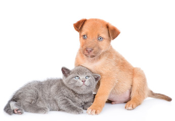 mixed breed puppy and kitten lying together. isolated on white background