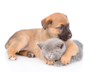 crossbreed puppy hugging a sleeping kitten. isolated on white background