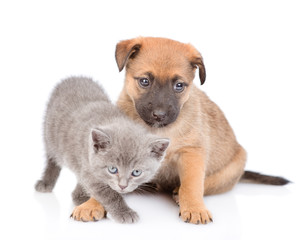 mongrel puppy and kitten looking at camera together. isolated on white background