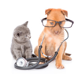 kitten looks at the mixed breed puppy with glasses and stethoscope on his neck. isolated on white background