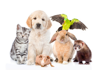 Group of pets together in front view. Isolated on white background