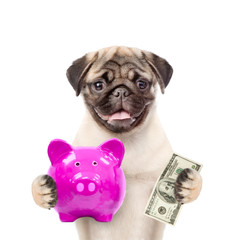 dog holds piggy bank and dollars usa. isolated on white background