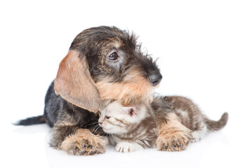 Puppy embracing tiny kitten. isolated on white background