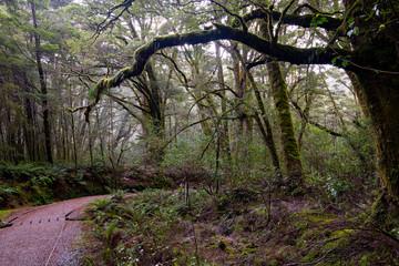 Rainforest walk, Blue Pools