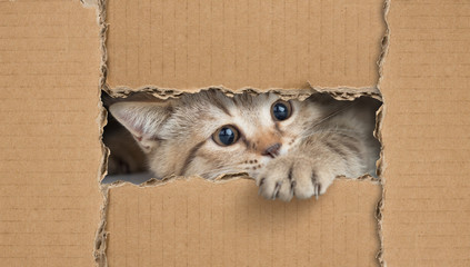 Papier Peint - Funny cat looking through cardboard hole