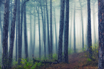 misty forest in the morning