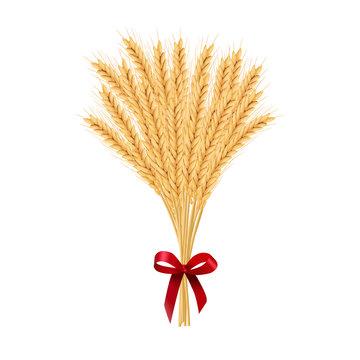 Sheaf of wheat. Reap of spiked grain heads. Christmas sheaf. Bunch of crop ears. Spikes, Julkarve, Julenek,