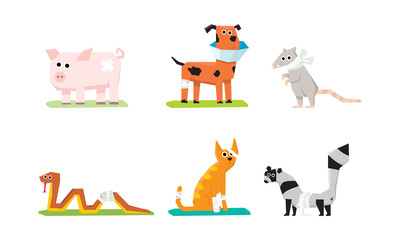 Sick and wounded animals set, veterinary care, pig, rat, cat, snake, dog, raccoon with plasters and bandages vector Illustration