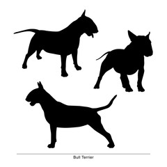 Bull Terrier breed dog. Vector silhouette of the dog