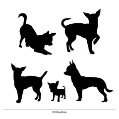 Chihuahua breed dog. Vector silhouette of the dog