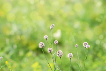 Nature background with wild grass, bokeh, wallpaper green environment. Beautiful nature scene with grass in nature.