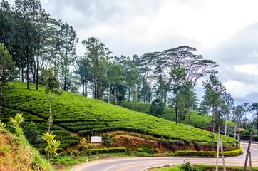 A winding road that runs through tea plantations. Nuwara Eliya. Sri Lanka.