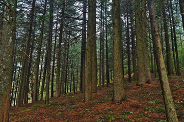 Forest in Serra da Estrela Natural Reserve. Covilha, Portugal