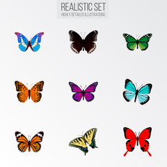 Set of butterfly realistic symbols with green peacock, danaus plexippus, monarch and other icons for your web mobile app logo design.
