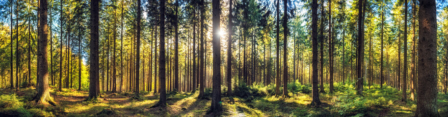 Fotobehang Bos Panoramic autumn forest landscape