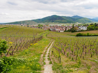 Keuken foto achterwand Wijngaard Wide aerial view of stairs through a hillside vineyard with town in background. Alsace Wine Route, Turckheim, France. Travel and winemaking tourism.