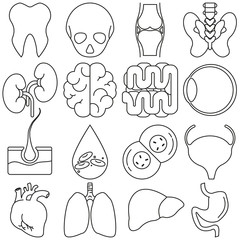 Icons of human organs in the style of lines