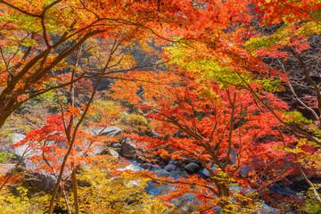 Closeup beautiful maple leaves in autumn season
