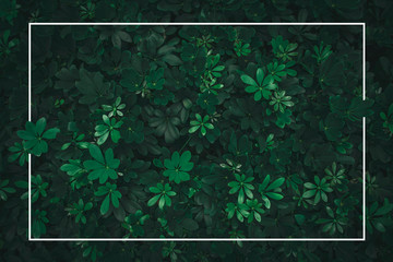 Natural green leaf wall for Texture and background