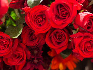rose flowers decorations in love valentine day