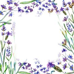 Purple lavender. Floral botanical flower. Watercolor background illustration set. Frame border square.