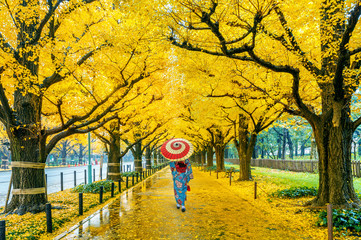 Wall Mural - Asian woman wearing japanese traditional kimono at row of yellow ginkgo tree in autumn. Autumn park in Tokyo, Japan.