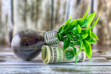 One dollar banknotes and plant growing inside the light bulb. Green eco energy concept. Electricity prices, energy saving.