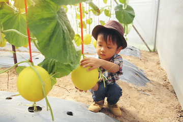 The boy is watching the melon tree grow. And Melon with interest..The concept of learning outside the classroom.