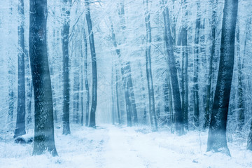Winter Landscape, Footpath through Beech Tree Forest with drifting snow
