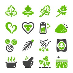 coriander icon set,vector and illustration