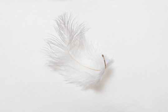 White feather on soft pillow