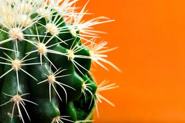 Foto op Plexiglas Cactus green cactus on a colored orange background