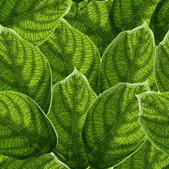 Vibrant textured green leaves with veins seamless pattern.