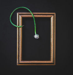 Flower in a picture frame