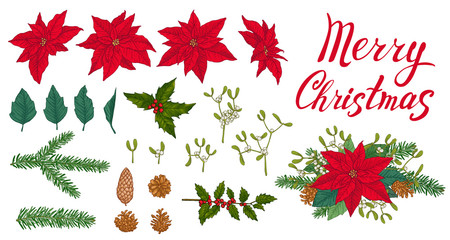 Set of winter plants, flowers and berries. Red poinsettia, leaves, mistletoe, holly, fir, pinecones, Merry Christmas lettering and christmas bouquet on white background.
